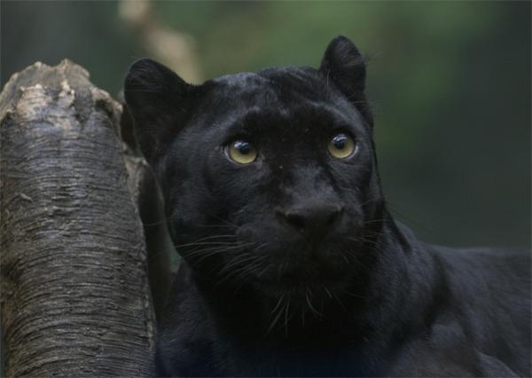 Jak Wygląda Puma Internetowy